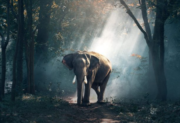 Hidden Meaning of Karma: Timeless Wisdom from Vivekananda, D.T. Suzuki and Madam Blavatsky
